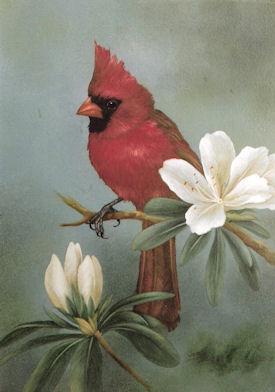 sn-northern-cardinal-1914001-4x6.jpg