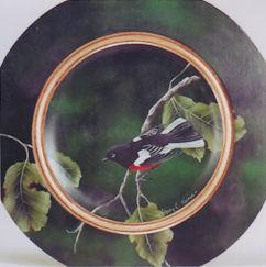 sn-painted-redstart-warbler-191410-sm-c.jpg