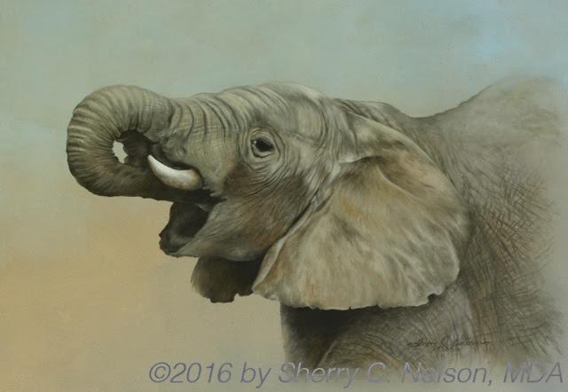 sn2018-elephant-days-4-5.jpg